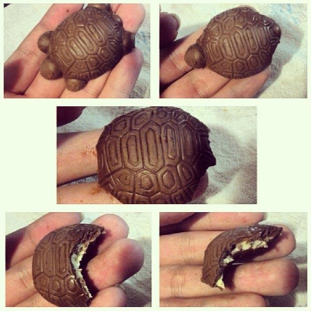 como comer tortuguita