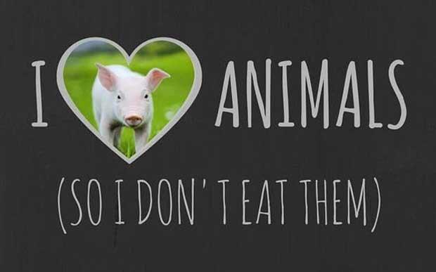 Imagem: Repdodução/ Mercy For Animals