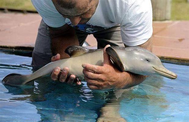 filhote_golfinho
