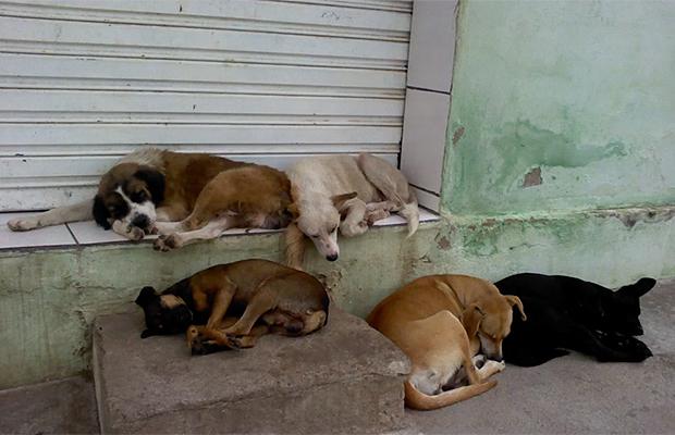 Aprovada morte de animais de rua e multa para quem alimentá-los?