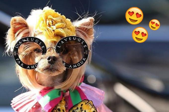miss-lo-cachorrinha-fashionista-destaque