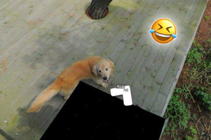 Cachorrinho segue aparelho do Google Street View e vira meme