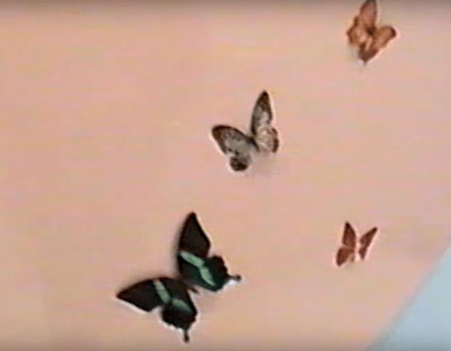 kylie-jenner-quarto-filha-borboletas