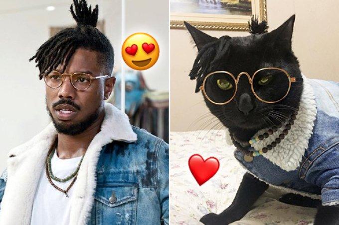 Esse gato roubou o look de Michael B. Jordan em Pantera Negra!