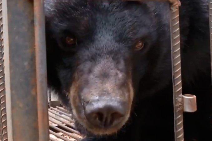 urso-familia-chinesa-pensava-que-era-cachorro