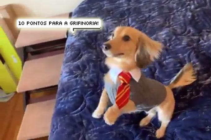 Cão bruxo? Este cachorro consegue responder aos feitiços de Harry Potter!