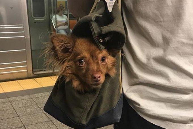 cachorros-em-bolsas
