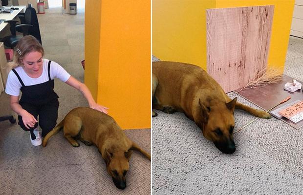 Sasha dog: o filtro do cachorro fake está rendendo memes maravilhosos!