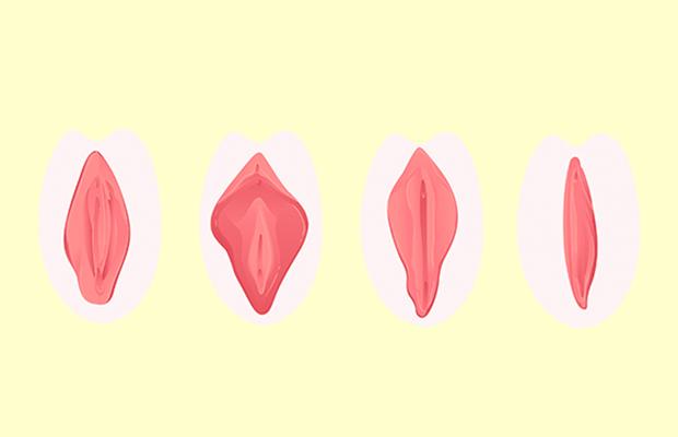 O ABC da vulva: é a mesma coisa que vagina? Quais são suas partes?