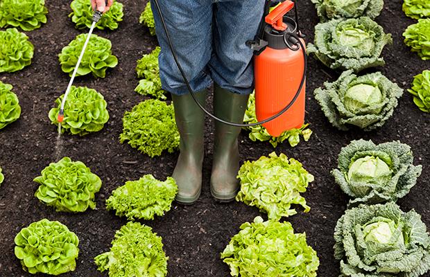 Agrotóxicos: não tem mesmo para onde correr?