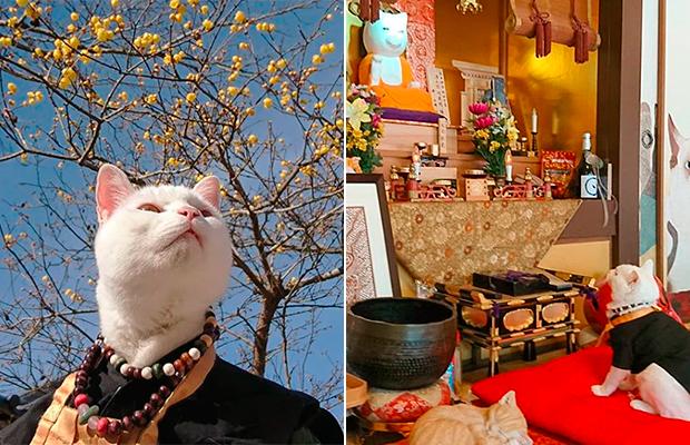 Conheça o templo dos gatos comandado pelo monge Koyuki (que é um gatinho!)
