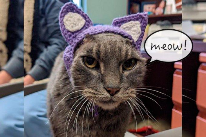 Gatinho ganha orelhas de crochê após diagnóstico de infecção crônica