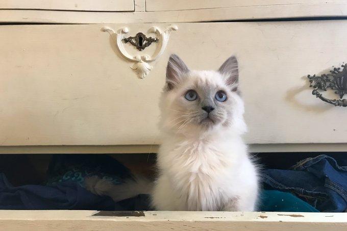 17 de Feveireiro: Dia Mundial dos gatos