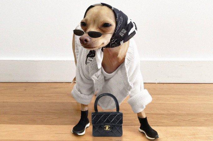 Instagram cachorra estilosa