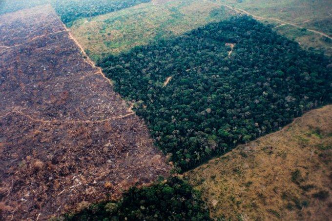 Desmatamento na Amazônia cresce 51% em meio à pandemia de coronavírus