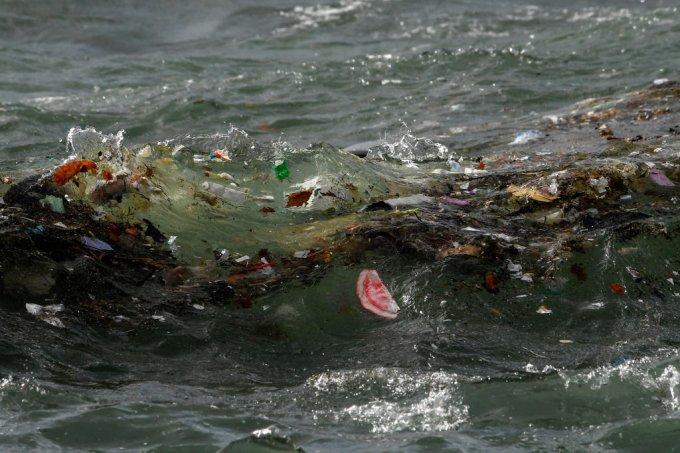 8 maneiras de ajudar a salvar os oceanos sem sair de casa