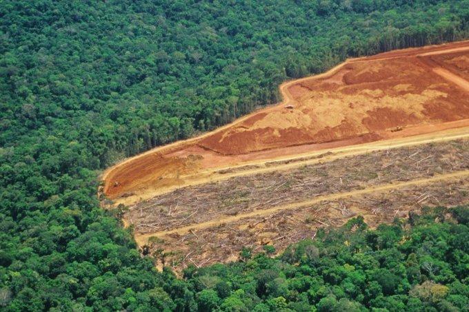 Desmatamento na Amazônia bate novo recorde em plena pandemia