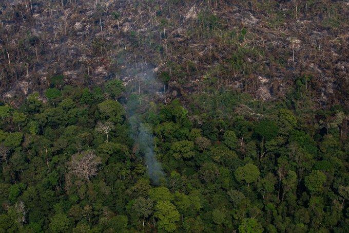 Na última década, nenhuma das metas de preservação da natureza foi atingida