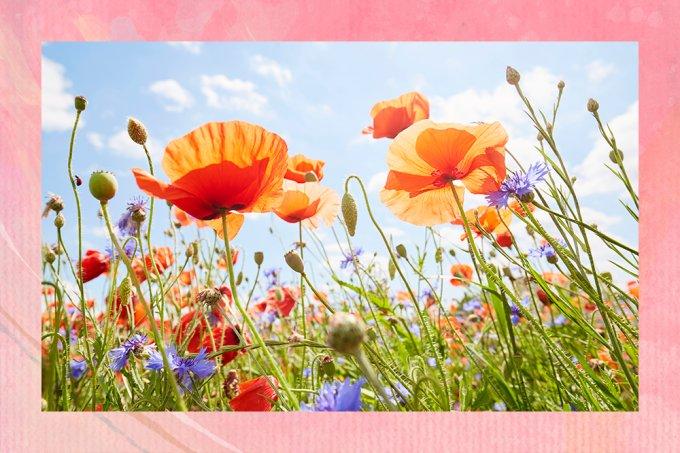 Primavera: Descubra quais flores combinam com seu signo
