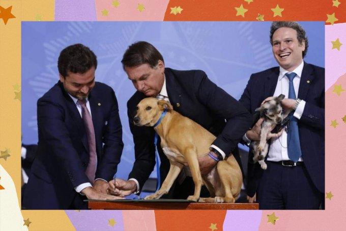 Lei Sansão, que agrava pena contra quem maltrata cães e gatos, é aprovada