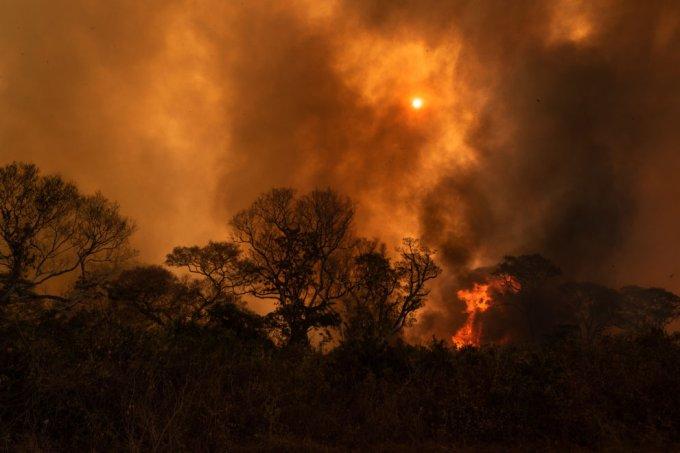 """Incêndios no Pantanal não são naturais: """"O governo está mentindo"""""""