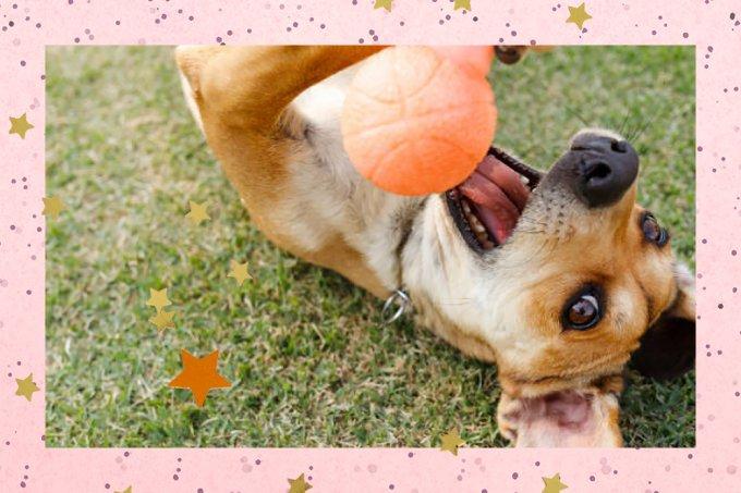 Saiba quais são os nomes e as raças de cachorro mais populares no Brasil