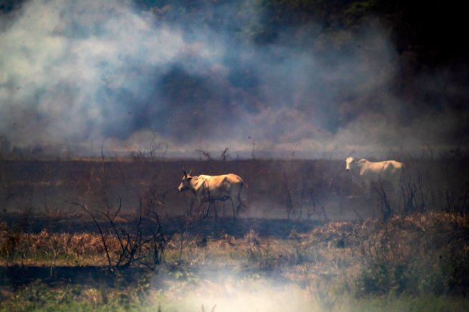 Ibama paralisa operação contra queimadas no Brasil por falta de recursos