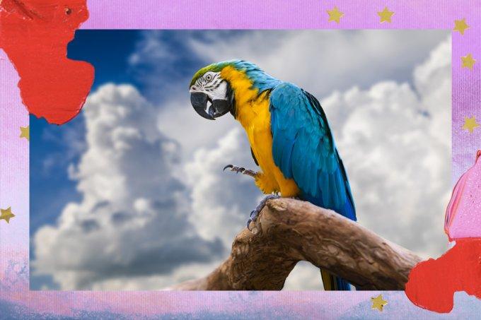 Queimadas no Pantanal: arara-azul corre novo risco de ameaça de extinção