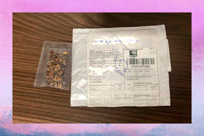 """199 pacotes com """"sementes misteriosas"""" foram enviados ao Brasil; entenda"""