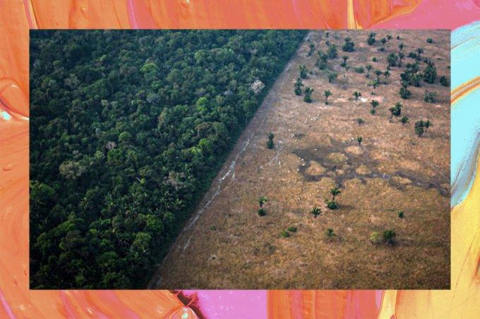 Desmatamento na Amazônia fecha 2020 como sendo o maior em 12 anos