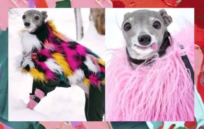 Tika The Iggy viraliza na internet por seus looks diferentes