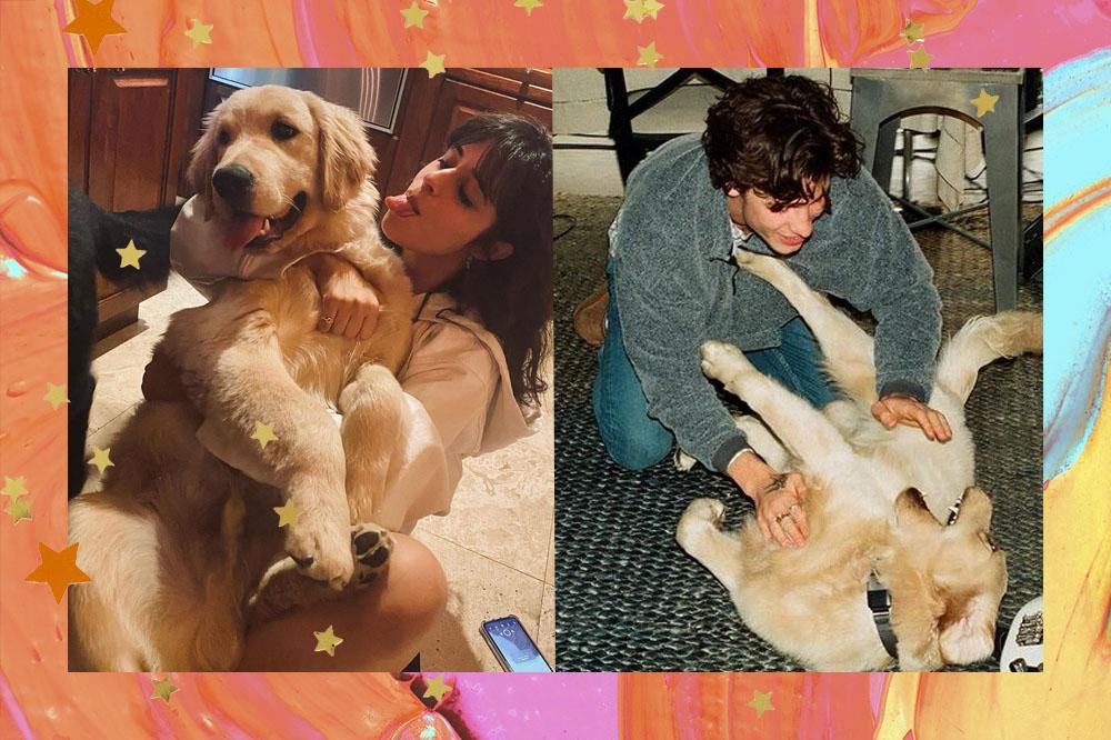 Montagem com duas fotos; na primeira Camila Cabello está abraçando um cachorro de pelo dourado enquanto mostra a língua; na segunda Shawn está usando um moletom e fazendo carinho na barriga do mesmo cachorro