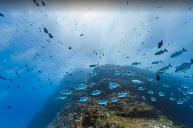 Imagem de um mergulho em Fernando de Noronha. A água é azul cristalina e tem muitos peixes azuis nadando nela
