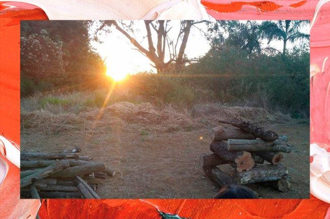 Imagem de árvores, pedaços de madeira, e o pôr do sol ao fundo