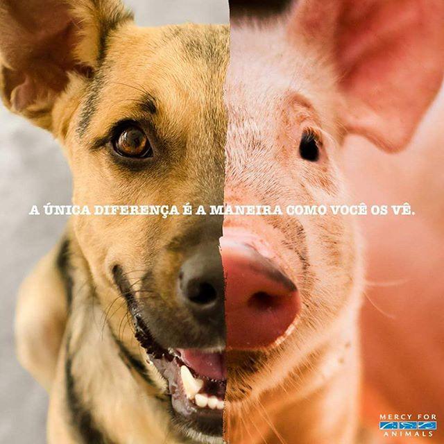 Imagem mostrando metades da face de um cachorro e de um porco unidas pela frase: