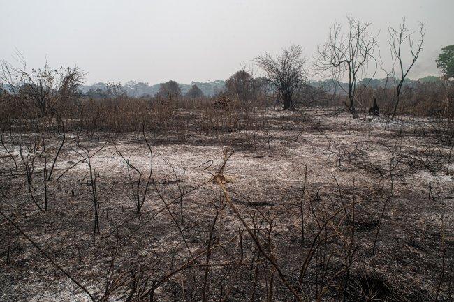 Área do Pantanal completamente devastada após queimadas