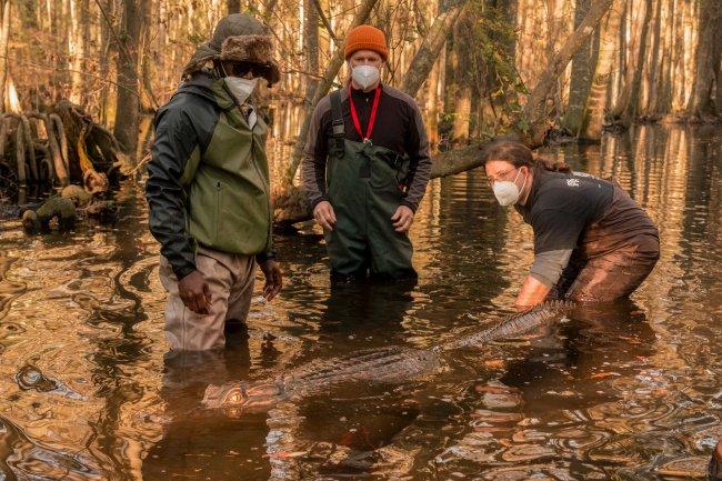 Jacaré usado em cena da segunda temporada de Outer Banks; ele está sendo segurado e colocado na água por uma pessoa da equipe enquanto outras duas observam; todos os membros da produção usam máscaras e roupas de frio