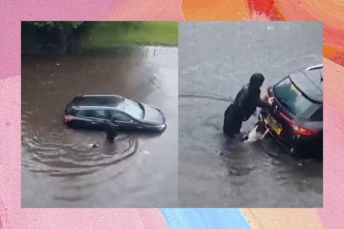 Cachorro ajuda dona a empurrar carro em enchente e cai nas graças da web