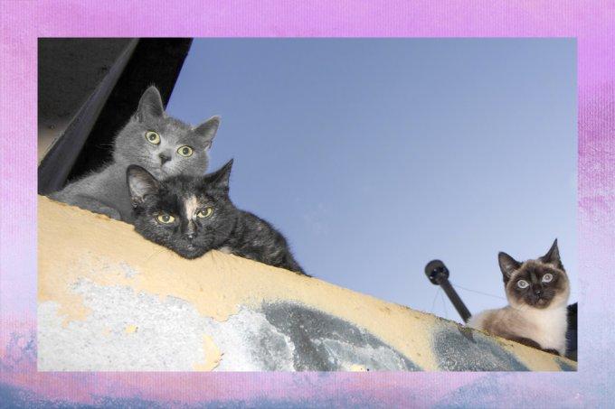 Revolução dos bichos: gatos abrem processo na Justiça contra condomínio
