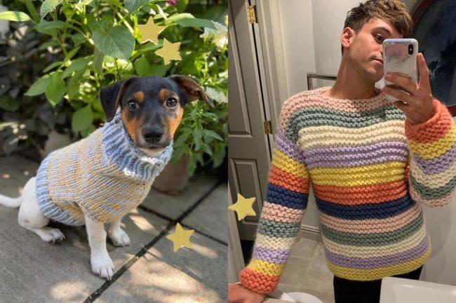 Um cachorro vestindo um suéter bege e azul, e o saltador Tom Daley vestindo um suéter colorido