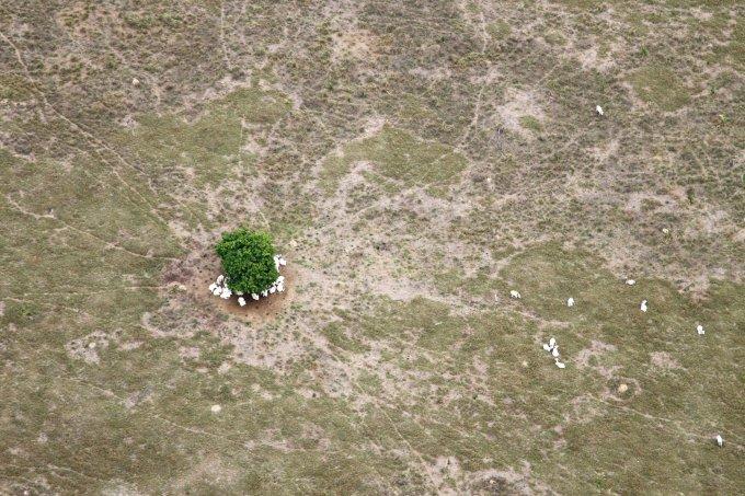 Amazônia: 95% das espécies foram afetadas pelas queimadas dos últimos anos